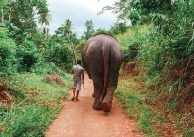 UniTrips - Sri Lanka - Elephant Freedom Project