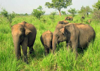 UniTrips - Sri Lanka - Elephant Transit Home 1