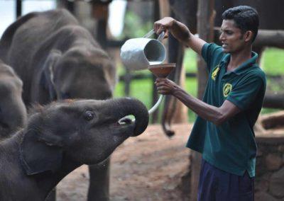 UniTrips - Sri Lanka - Elephant Transit Home 2