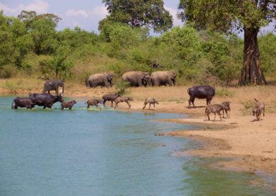 UniTrips - Sri Lanka - Udawalawe National Park