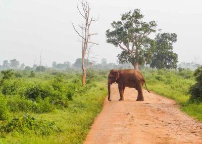 UniTrips - Sri Lanka - Udawalawe National Park 2