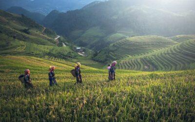 Vietnam: deze highlights mag je niet missen!