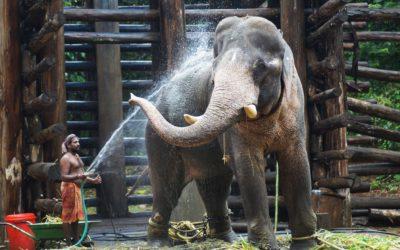 Drie leuke weetjes over Thailand